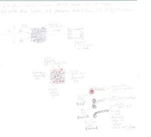 scan1190 Helen Porteous, design sheet